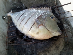 1.10kg fish for only Php110